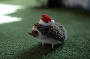 Yeah, it's a hedgehog with a hat