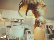 Sony's Using a Cute Kitten to Market Gravity Rush 2 in Japan